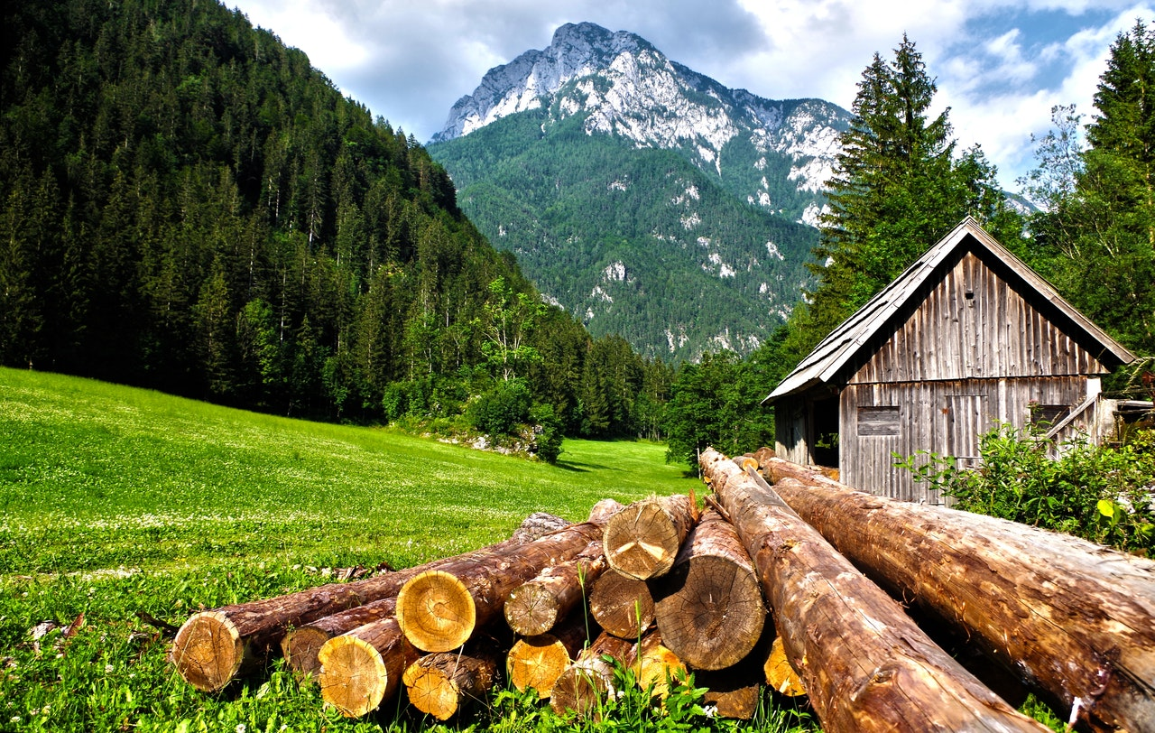 Qu'est-ce qu'une rogneuse de souche d'arbre?